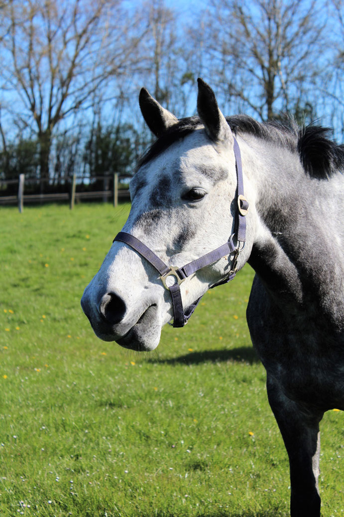 RuFV Husbyharde- zufriedene Pferde und Reiter